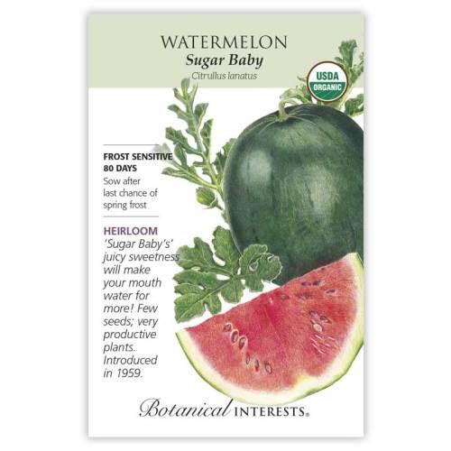Sugar Baby Watermelon Seeds Organic Heirloom