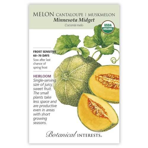 Minnesota Midget Cantaloupe/Muskmelon Melon Seeds Organic Heirloom