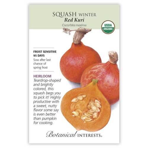 Red Kuri Winter Squash Seeds Organic Heirloom