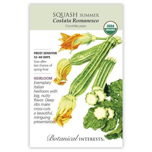 Costata Romanesco Summer Squash Seeds Organic Heirloom