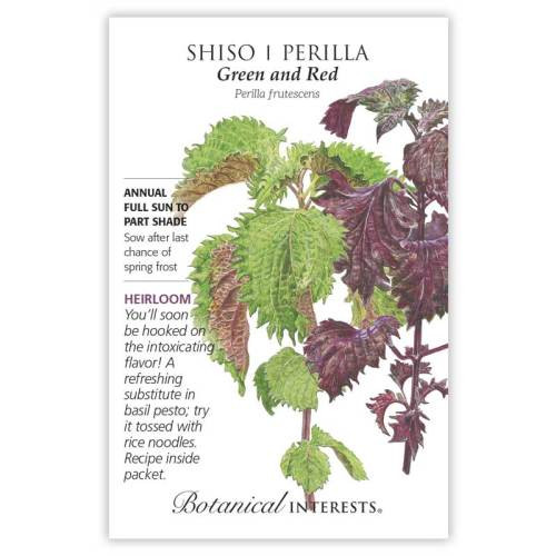 Green and Red Shiso Perilla Seeds Heirloom