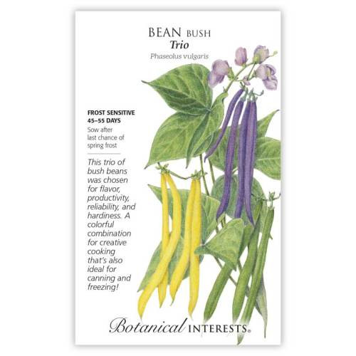 Trio Bush Bean Seeds Heirloom