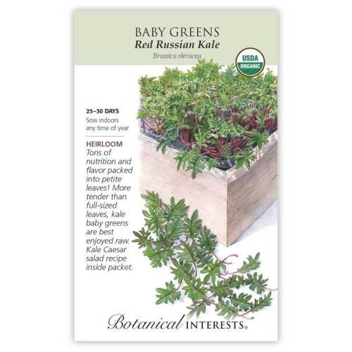 Red Russian Kale Baby Greens Seeds Organic Heirloom