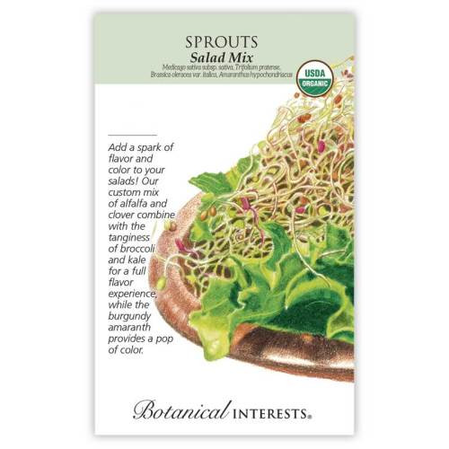 Salad Mix Sprouts Seeds Organic