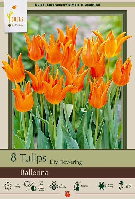 Ballerina Lily Flowering Tulip - 8 Bulb Pack
