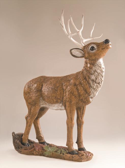 Mule Deer Buck, Head Up