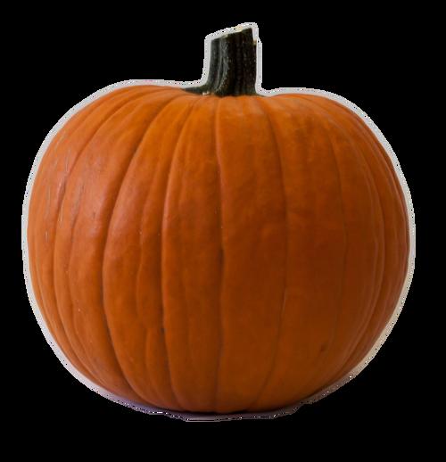 Orange Carving Jackpot Pumpkin