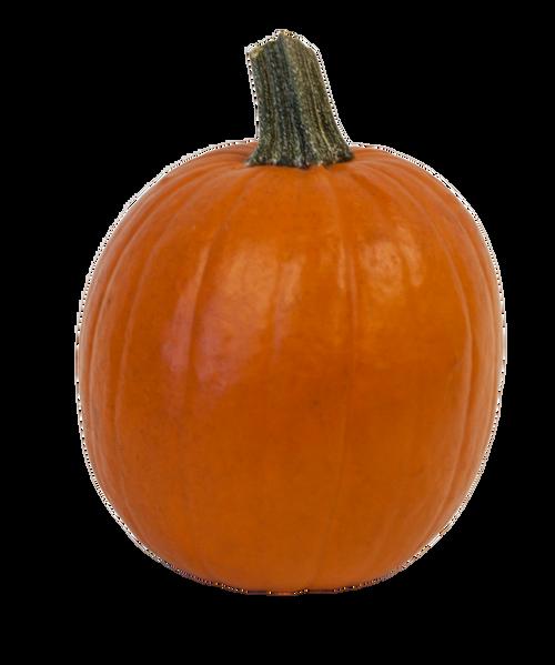 Orange Pie Pumpkin