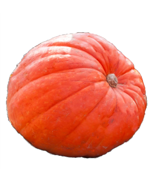 Orange Big Mac Pumpkin