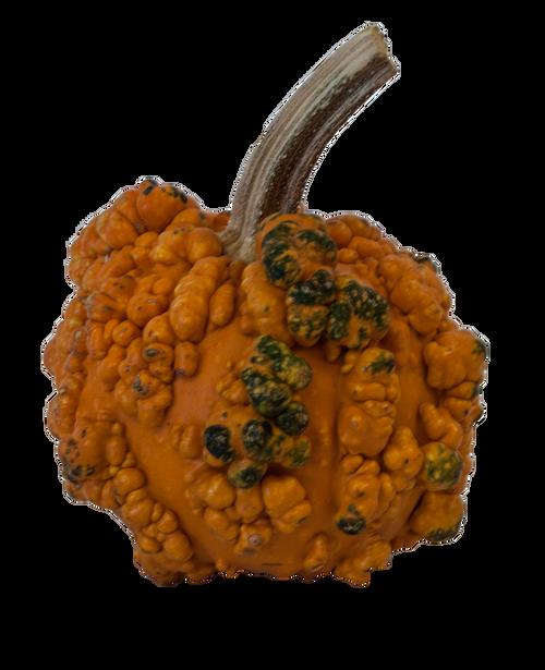 Orange Round Warty Minion Pumpkin