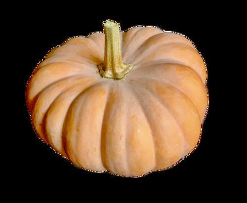 Mini Fairytale Pumpkin