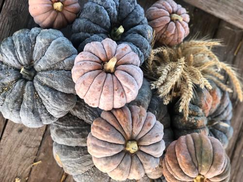 Kouyou Color-Changing Pumpkin