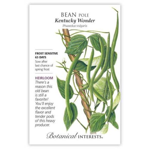 Kentucky Wonder Pole Bean Seeds Heirloom