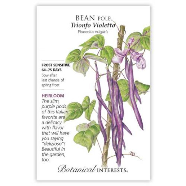 Trionfo Violetto Pole Bean Seeds Heirloom
