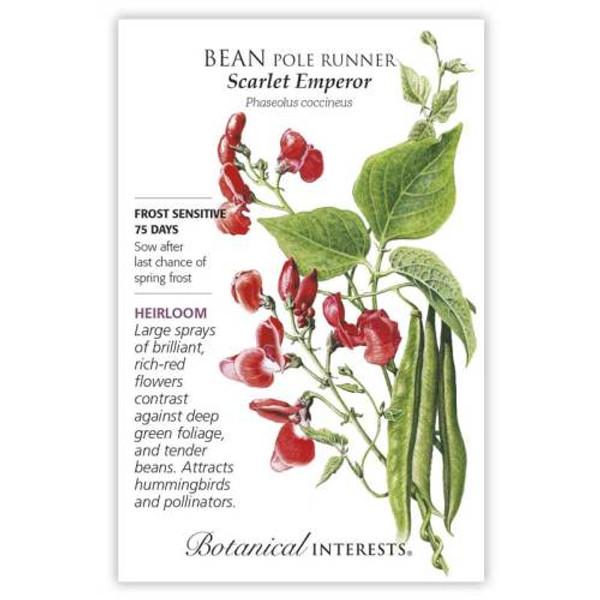 Scarlet Emperor Pole Runner Bean Seeds Heirloom