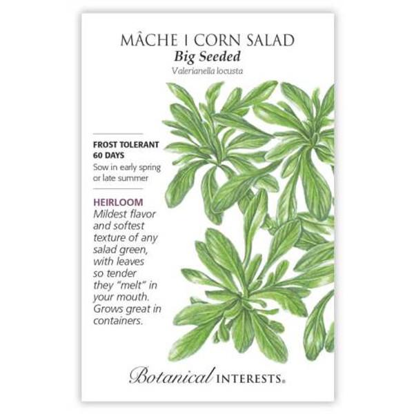 Big Seeded Mâche (Corn Salad) Seeds Heirloom