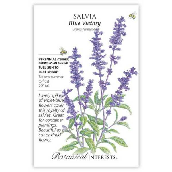 Blue Victory Salvia Seeds