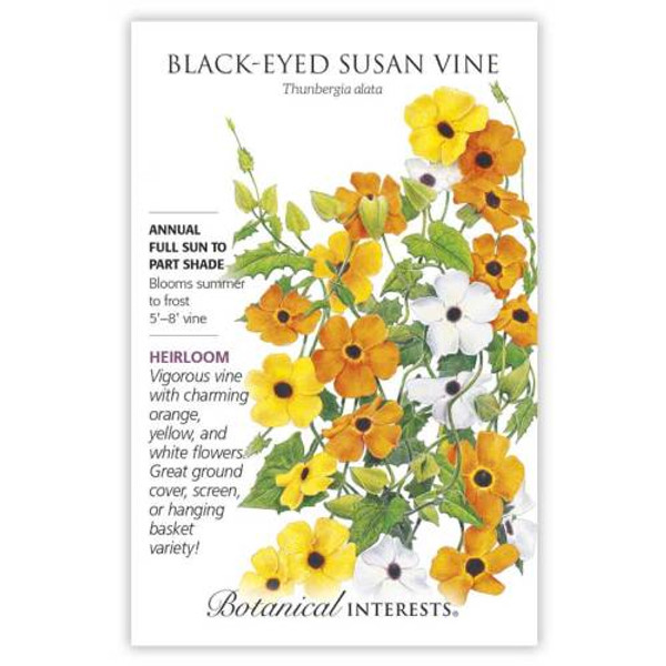 Black-Eyed Susan Vine Seeds Heirloom