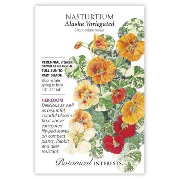 Alaska Variegated Nasturtium Seeds Heirloom