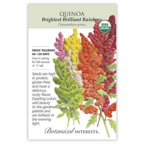 Brightest Brilliant Rainbow Quinoa Seeds Organic