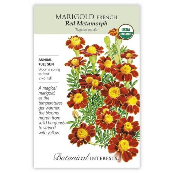 Red Metamorph French Marigold Seeds Organic