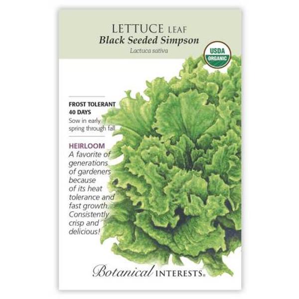 Black Seeded Simpson Leaf Lettuce Seeds Organic Heirloom