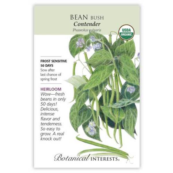 Contender Bush Bean Seeds Organic Heirloom