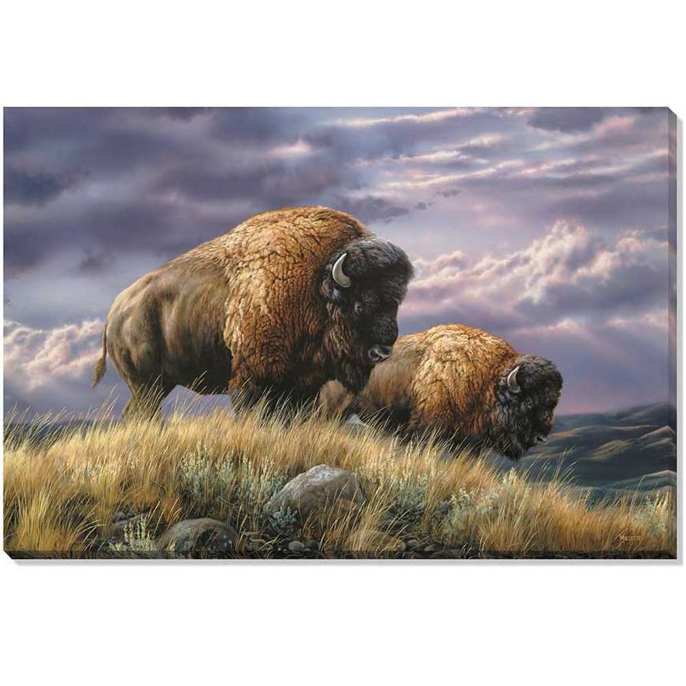 Bison Canvas Wall Art | Wild Wings | F593530469