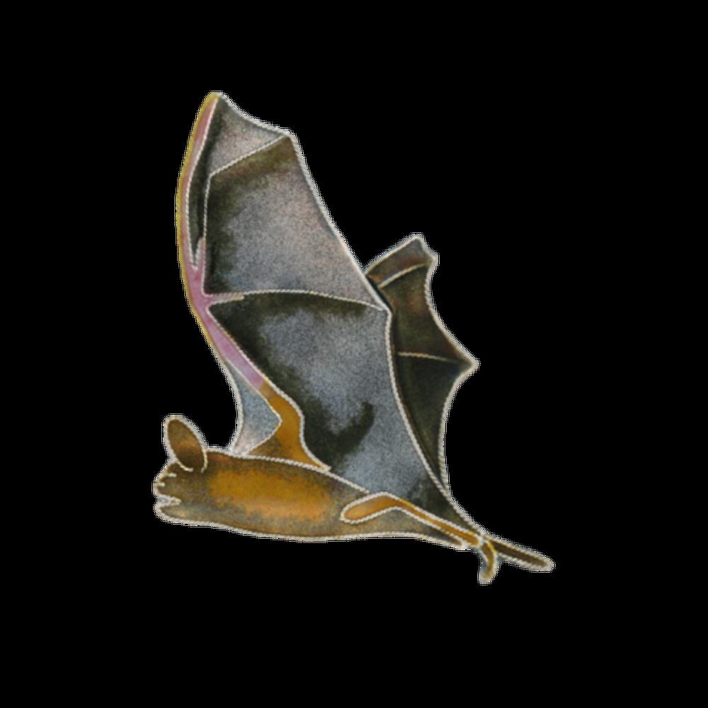 Free Tail Bat Pin | Bamboo Jewelry | BJ0068p