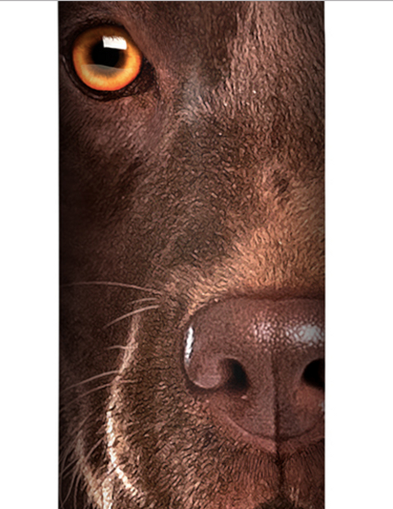 Chocolate Lab Face Stainless Steel 17oz Travel Mug | The Mountain | 5935501 | Chocolate Lab Travel Mug