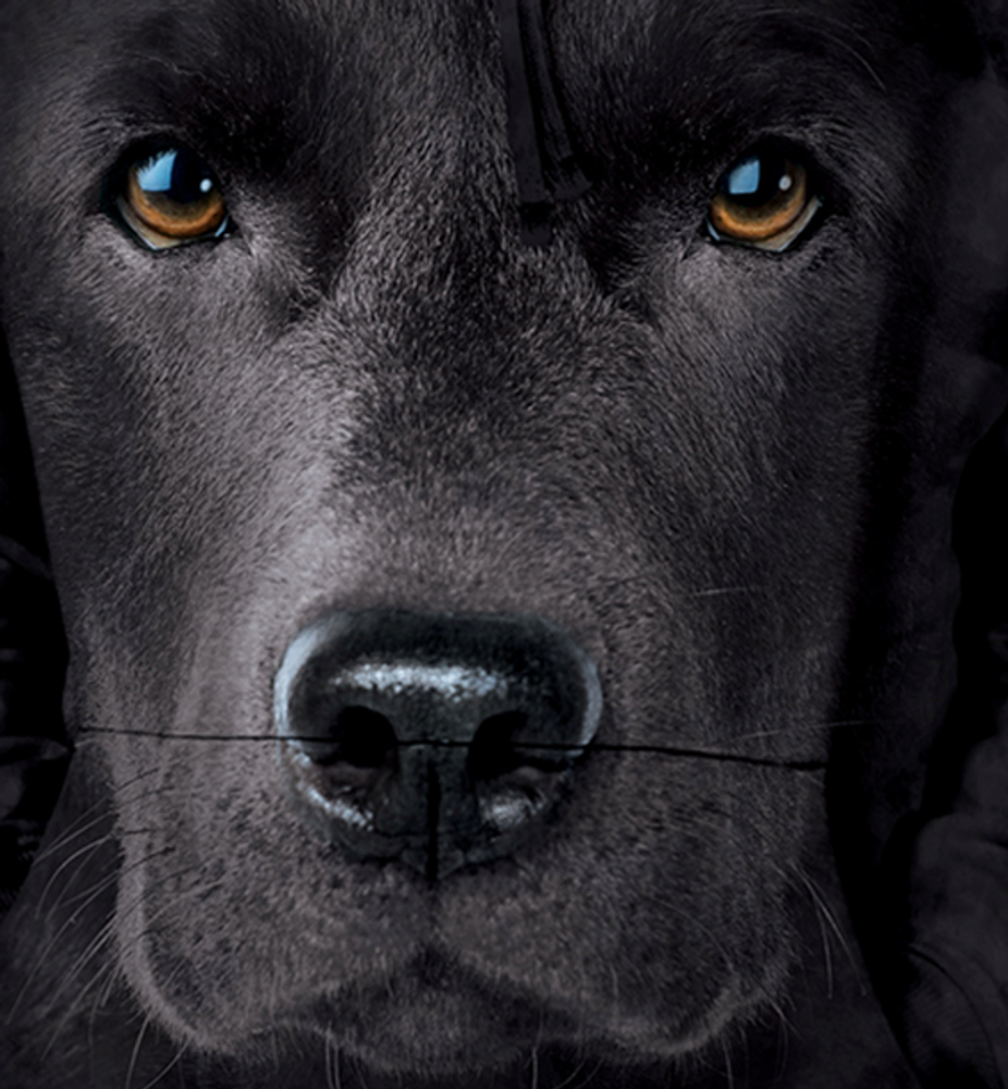 Black Lab Dog Face Unisex Hoodie | The Mountain | 723255 | Black Lab Sweatshirt