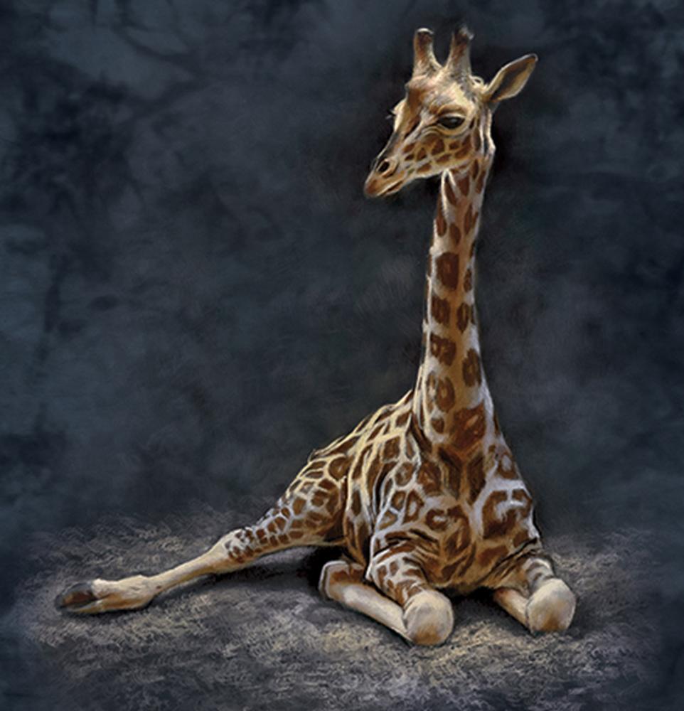 Giraffe Calf Unisex Cotton T-Shirt | The Mountain | 106443 | Giraffe T-Shirt