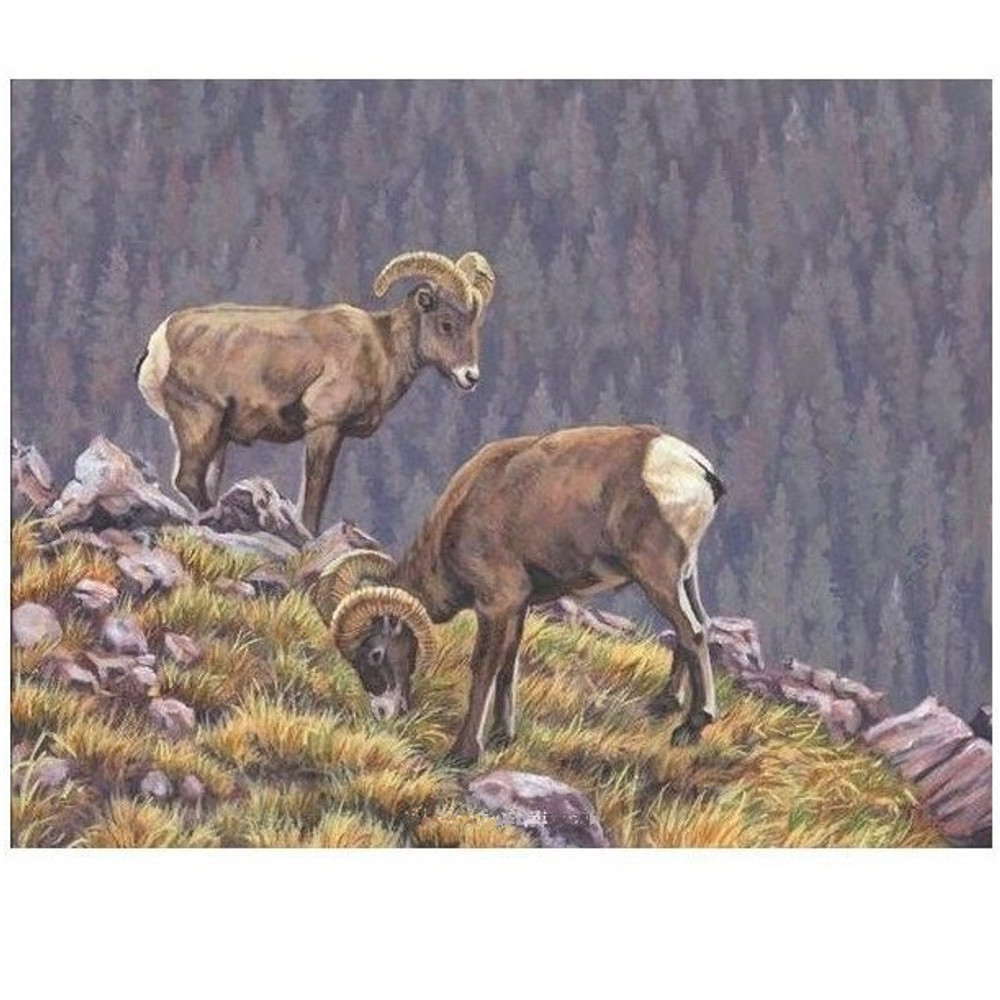 "Bighorn Sheep Print ""Tenants of the Tundra"" 