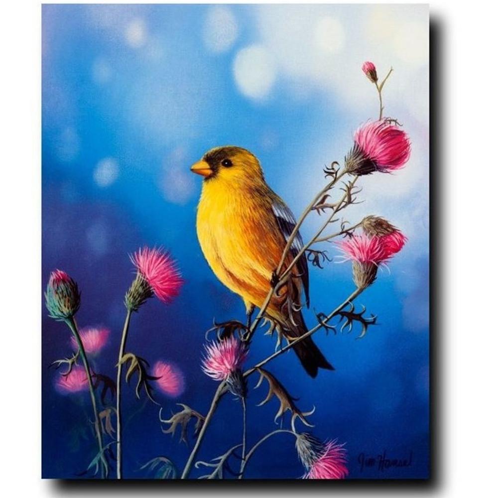 "Bird Print ""American Goldfinch"" | Jim Hansel | JHamericangoldfinch"