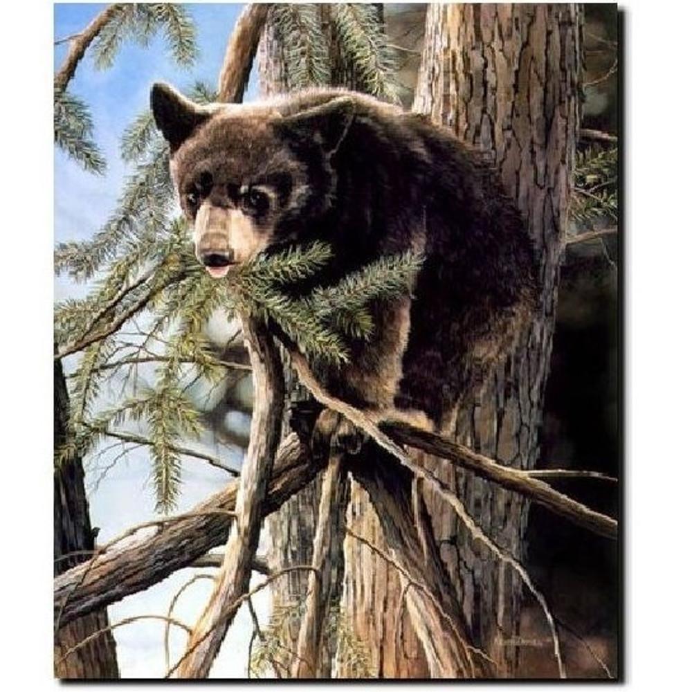 "Bear Print ""Out on a Limb"" | Kevin Daniel | KD140"