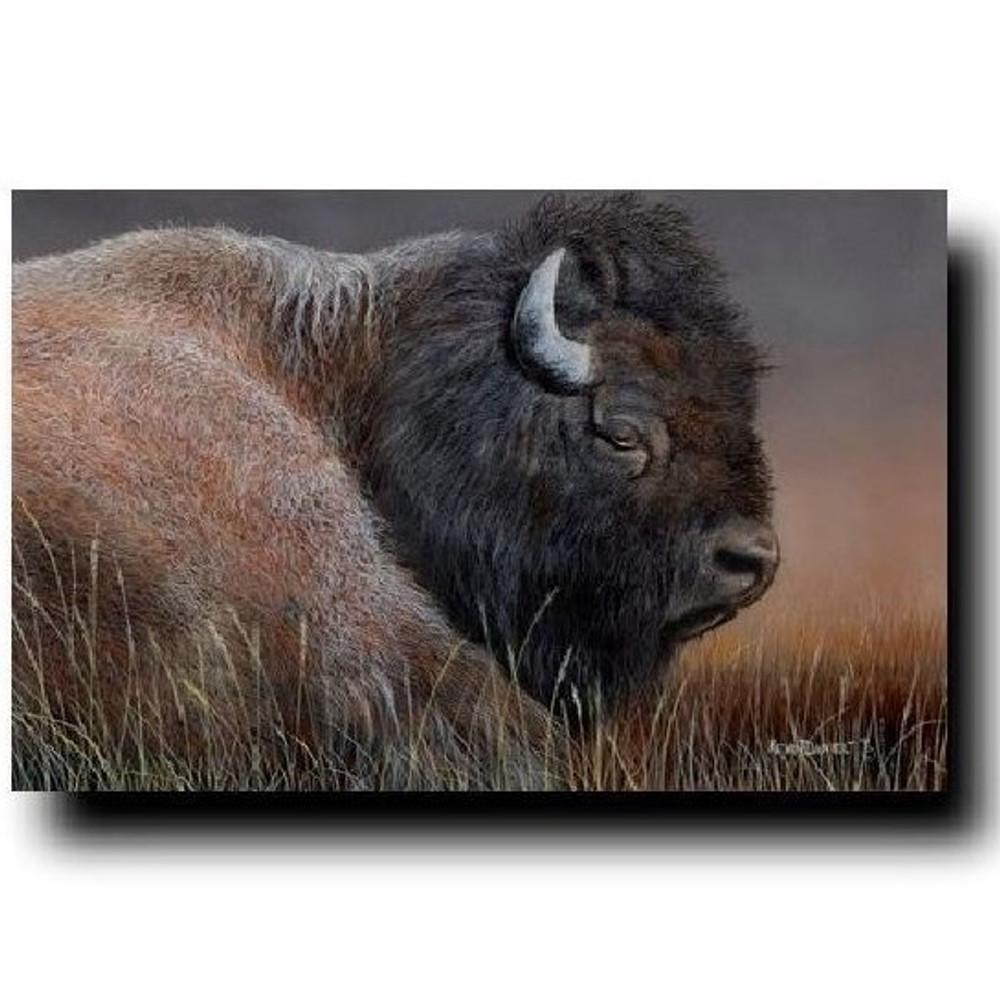 """Buffalo Print """"American Bison""""   Kevin Daniel   KD275"""