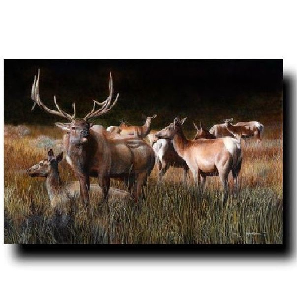 "Elk Print ""The Gathering"" | Kevin Daniel | KD352"