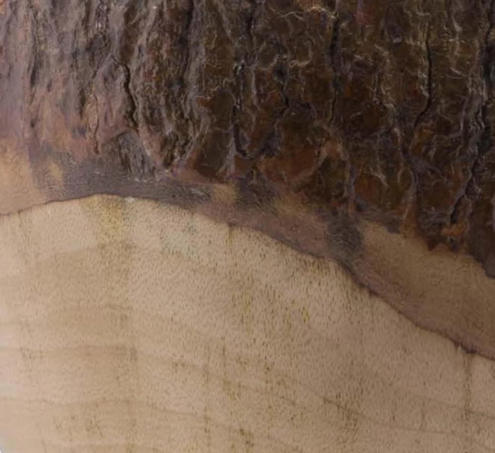 Elk Natural Log Ice Bucket | Vagabond House | B403EK