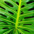 Monstera Leaf Artisanal Wooden Jigsaw Puzzle | Zen Art & Design | ZADMONSTERA