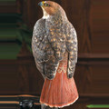 Red-tailed Hawk Sculpture | 6842062501 -2
