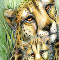 Cheetahs 15oz Ceramic Mug