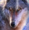 Adventure Wolf 15oz Ceramic Mug | The Mountain | 57401309011 | Wolf Mug