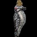 Vintage Hairy Woodpecker   OWC51004
