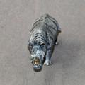 Rhino Baby Bronze Sculpture | Barry Stein | BBSRHINOBABY -3