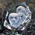 Owlets Crystal Sculpture | 33537 | Mats Jonasson Maleras -2