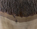 Bear Natural Log Ice Bucket | Vagabond House | S203BC