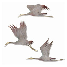 Crane Trio Wall Sculptures | 80131 | SPI Home