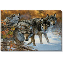 Timber Wolf Canvas Wall Art | Wild Wings | F476066371