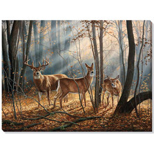 Whitetail Deer Canvas Wall Art | Wild Wings | F593866465