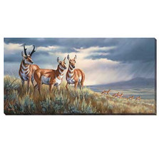 Pronghorn Canvas Wall Art | Wild Wings | F593024467